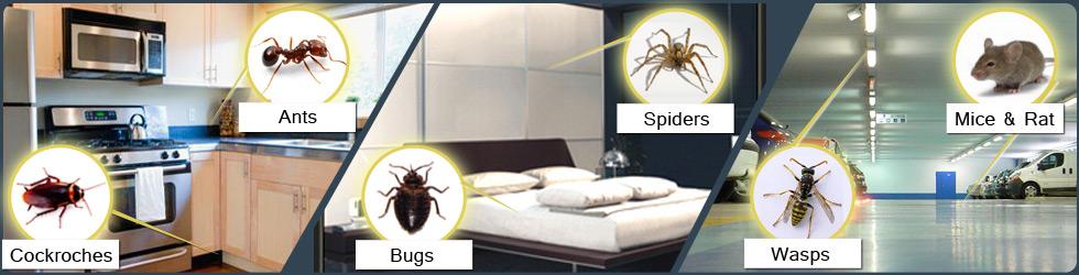 Emerald Pest Control